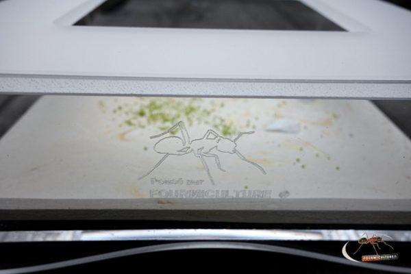 Espace d'Observation 15x15cm - Aire de Chasse avec Décor d'artiste