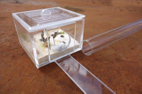 Porte-Tube de Fondation V3 Fourmiculture® (avec décor)