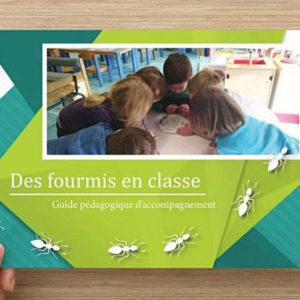 Kit Pédagogique Fourmis Culture – Des Fourmis en Classe