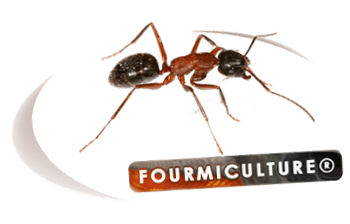 Fourmiculture