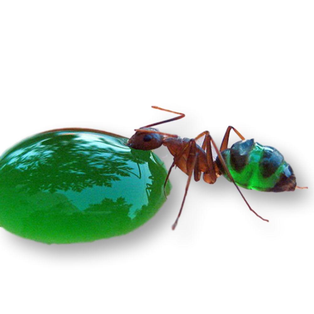 Colorant alimentaire vert pour Fourmis