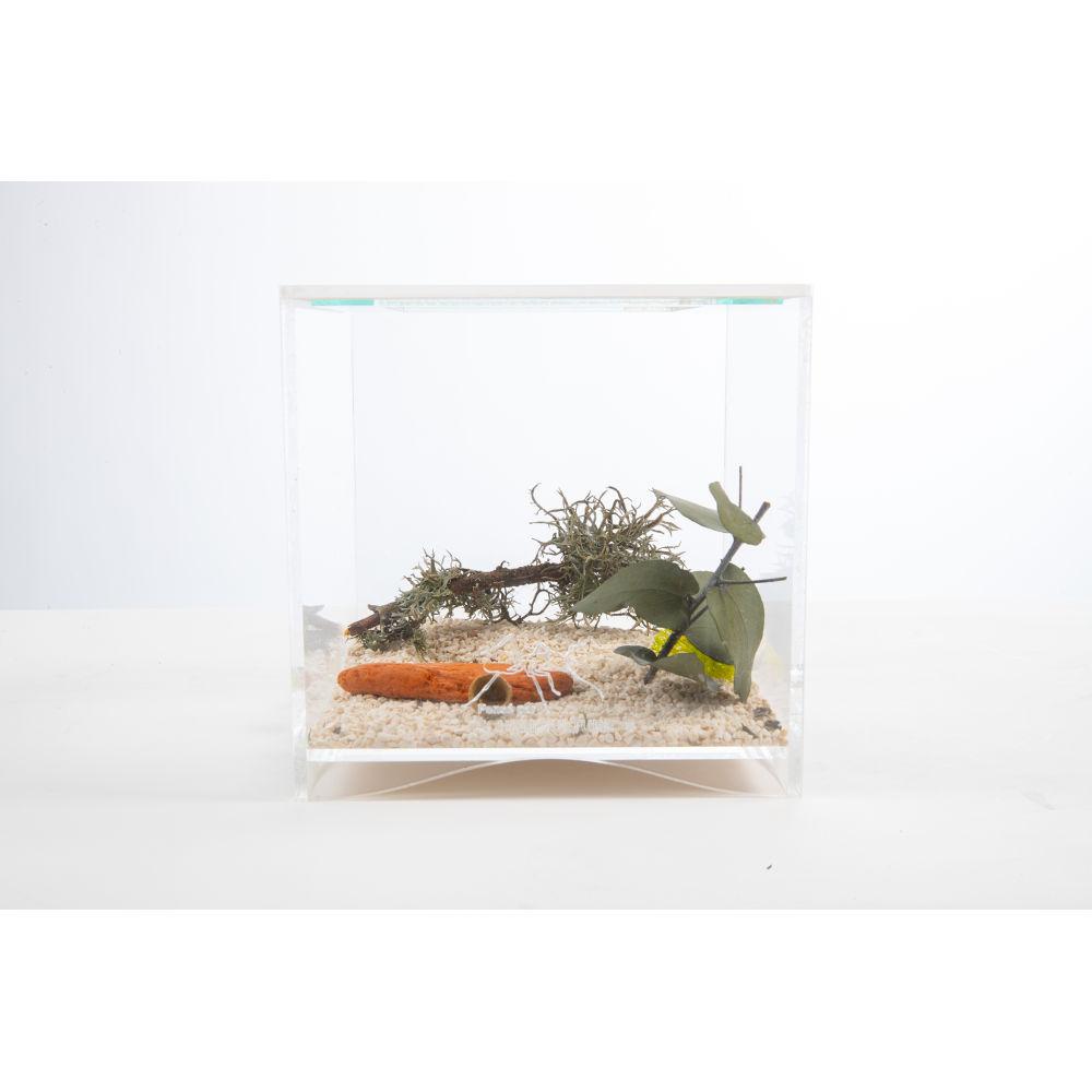 terrarium a fourmis 16cm