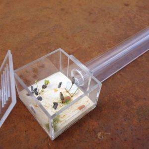 Le Pack de Fondation – Pack d'élevage des Fourmis