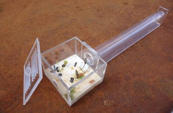 Le Pack de Fondation - Pack d'élevage des Fourmis