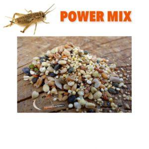 Power Mix 100gr – Grillons et graines pour Messor