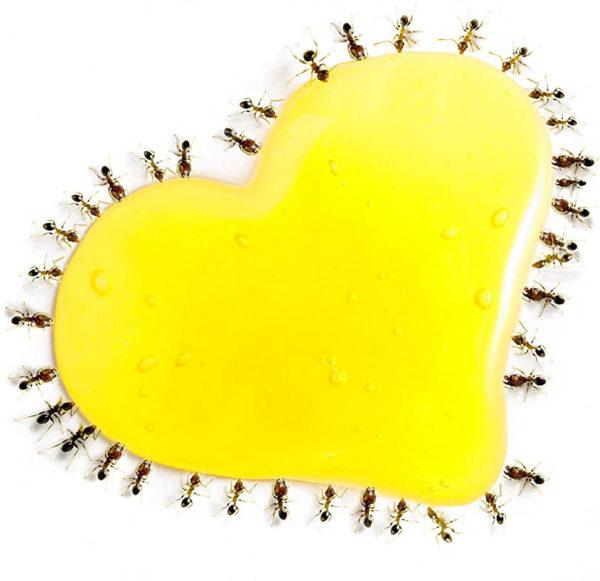 miellat à fourmis