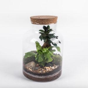 Kit Ecosystème Tropical Fourmis & Nettoyeurs – Taille M