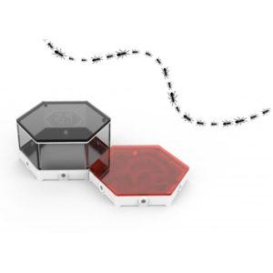 Fourmilière liège Happy Ant – Module habitable
