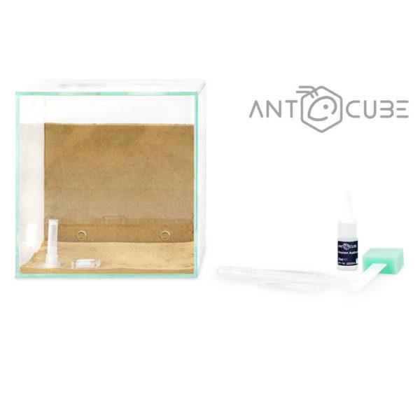 Nid creusable Antcube Combi Set
