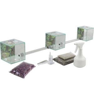 Kit d'élevage Coupeuses de feuilles Antcube